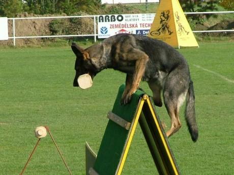 Kynológia - Fotoalbum - Výcvik psa - sport kyn 1a 08fa8fc0f34